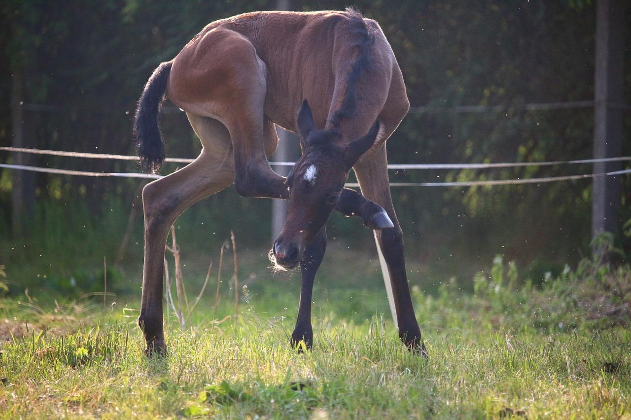 horse-1403890_1280